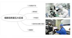 细胞培育室五大区域洁